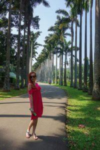 Palmová alej v Peradeniya