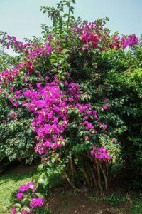 Peradeniya botanická záhrada