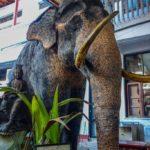 Posvätný slon