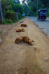 Všade po ceste takto oddychujú psi