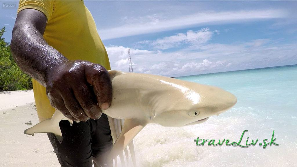 baby žralok