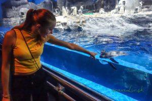Underwater world Langkaw