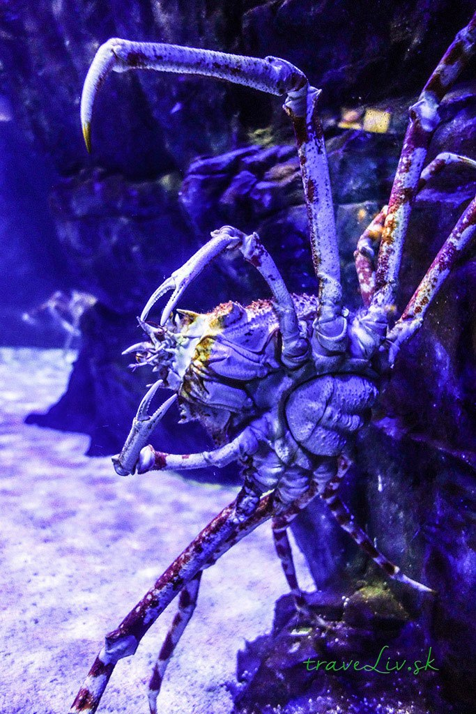Underwater world Langkawi3